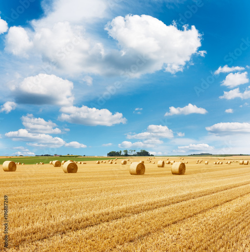 Fotobehang Honing Yellow golden straw bales of hay in the stubble field, summer landscape under a blue sky with clouds