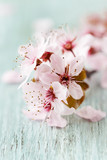 Spring flowers on wood background - 196890805