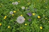 naturalna łąka zielna kwitnąca, Polska - 196913445