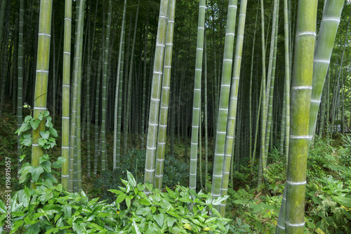 Papiers peints Kyoto Bamboo forest at Kyoto, Japan