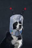 chien Border Collie avec casque de cosmonaute