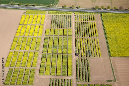 Fototapeta Luftbild von Raps-Versuchsfeldern