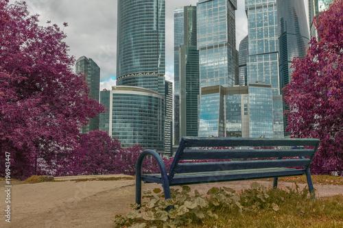Fototapeta скамейка с видом на небоскребы в парке на фоне розовых деревьев сакуры весной