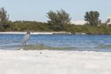 Bird at the beach - 196945878