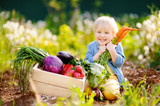 Fototapety Cute little boy holding a bunch of fresh organic carrots in domestic garden