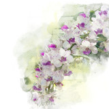Illustration of beautiful blossom rhynchostylis orchid. Artistic floral abstract background. Watercolor painting (retouch). - 196963413