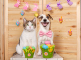 Dog and cat. Easter