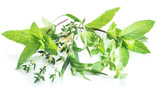 Different fresh green herbs on the white background. - 196981634