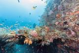 Coral reef off coast of Bali - 196997245