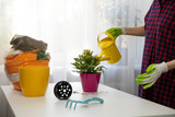 woman watering indoor plant after planting in a flower pot