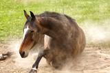 Pferd genießt Sand
