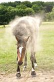 Pferd Sand Schütteln