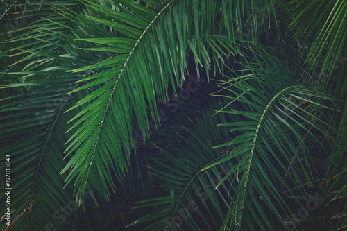 Tripical leaves background - 197013043
