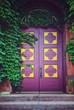 Vintage purple door and ivy leaves  - 197016465