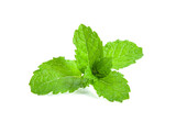 mint leafs herb. isolated on white background - 197024238