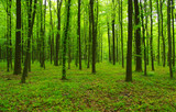 green forest in spring - 197029027
