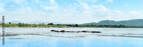 Foto op Plexiglas Lichtblauw Hippos