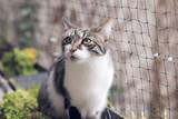 Katze auf katzensicherem Balkon mit Katzennetz