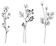 Hand drawn of vector vintage flowers elements isolated on white background.