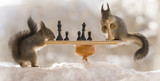 red squirrels with chess board in snow - 197038870