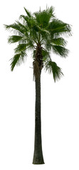 Green palm tree on white