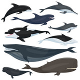 Nautical collection of different underwater big fishes and mammals animals