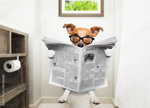 Poster Crazy dog dog on toilet seat reading newspaper