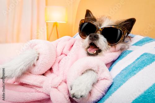 In de dag Crazy dog dog spa wellness salon