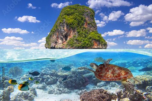 Leinwanddruck Bild Green turtle swimming underwater at the tropical island