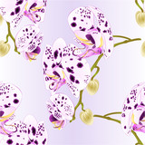 Seamless texture beautiful  Orchid dots white and purple stem with flowers and  buds closeup isolated vintage  vector editable illustration hand draw