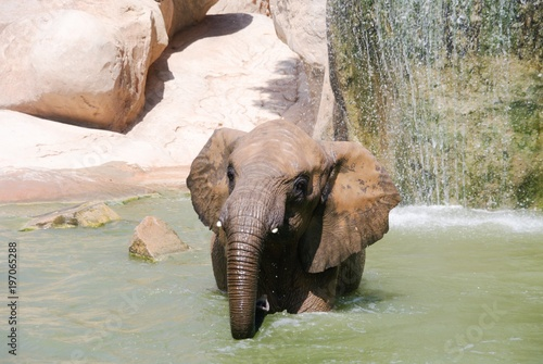 Wall mural Elephant looking abreast