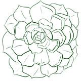 Echeveria contour illustration plant - 197067255
