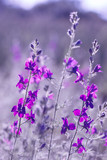 purple wild flowers - 197100249