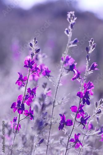 purple wild flowers - 197100249
