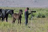 Wild Horse Photographer