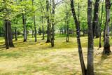 初夏の公園 - 197119831