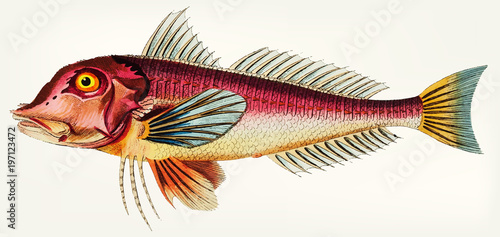 Illustration of fish isolated - 197123472