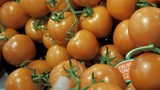 Buying tomatoes in supermarket - 197136266