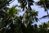 Palm trees - 197142621