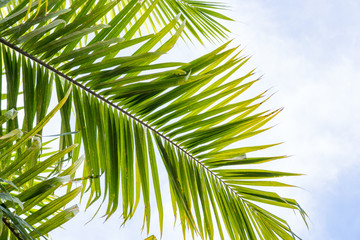 Palm tree leaves against sky background. Tropical scenery background.