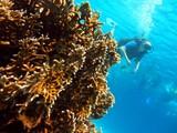 underwater - 197155854