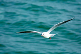 White seagull in the sky against a background of blue sea. Sea bird. Summer. Fly. Space for text. - 197162687