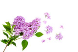 lilac flower on old wooden background - 197166411