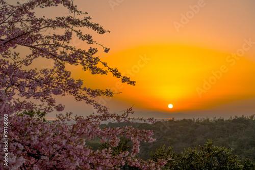 Aluminium Meloen 豊前の河津桜