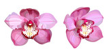 2 pink orchids