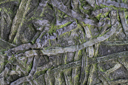 old root and rope texture