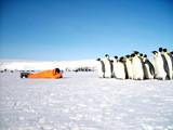 A researcher from the polar station is studying penguins. Antarctic. - 197268276