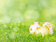 Easter eggs on the green grass lawn spring background