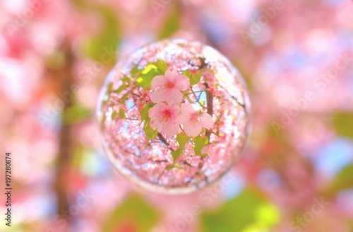 Fotobehang Lichtroze 河津桜 葉桜を閉じ込めて