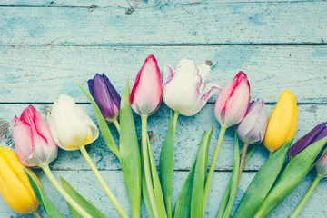 Colorful tulips on a blue wooden background/toned photo